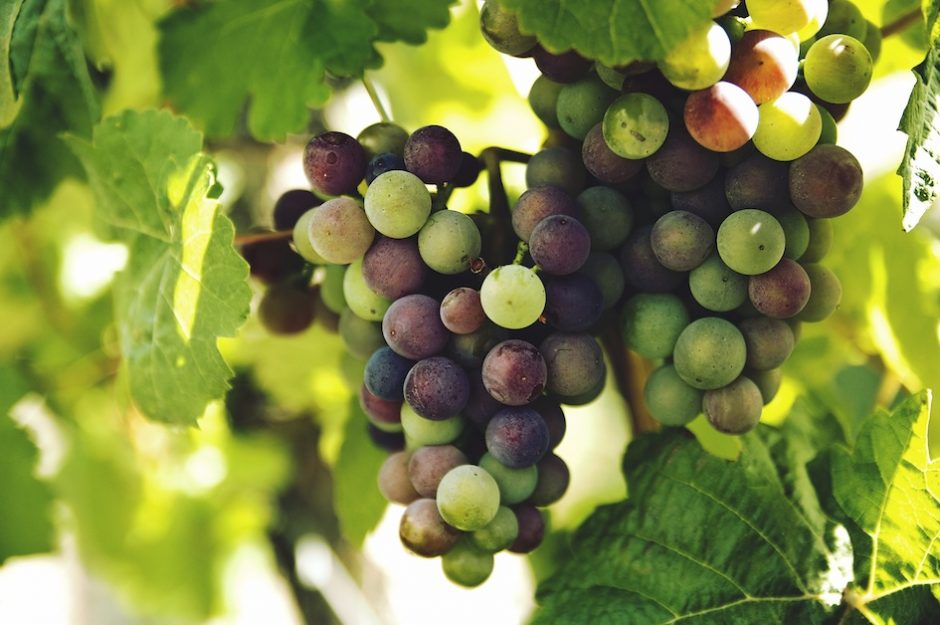 wine_grape_clusters