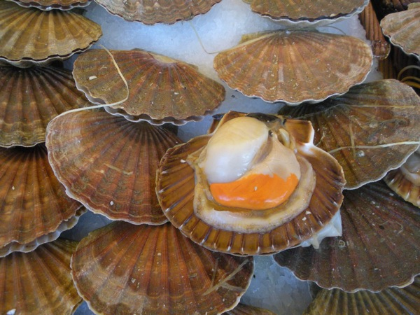 scallops_Bastille_market