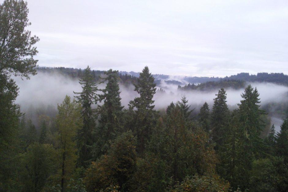 trees_stargazer_farm_portland